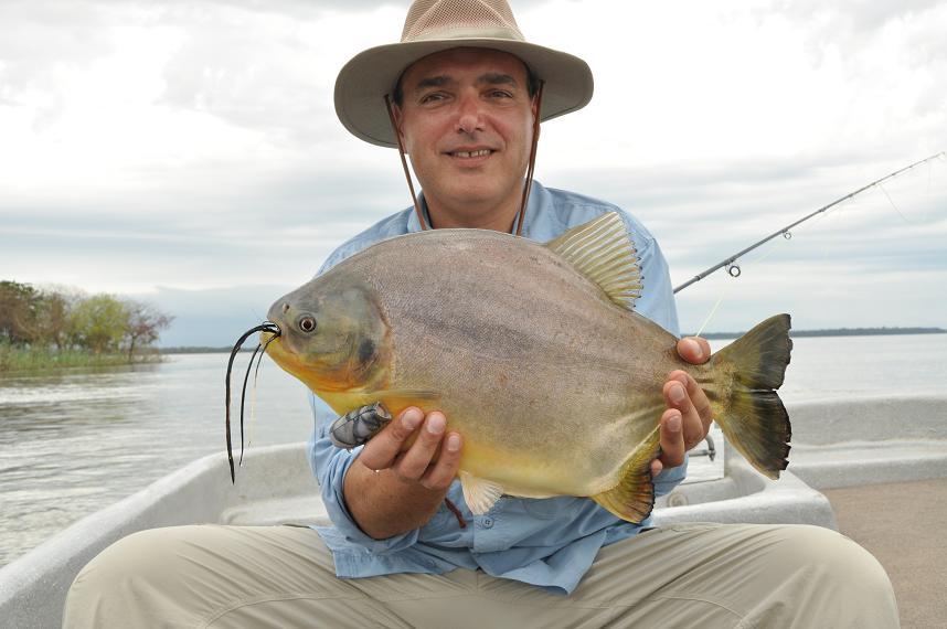 More dorado fishing on the upper rio parana faraway fly for Parana the fish
