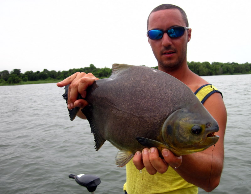 Pacu session on upper parana river faraway fly fishing for Parana the fish