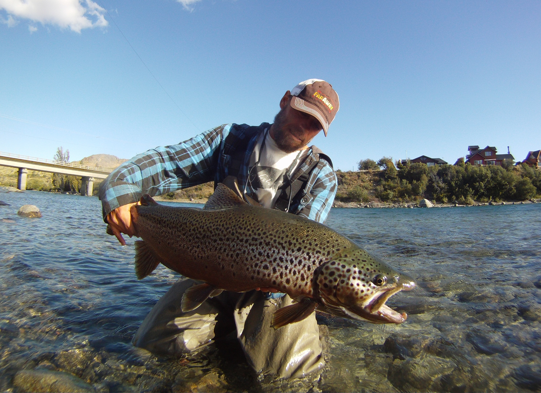 Limay brown faraway fly fishing for Fishing in argentina